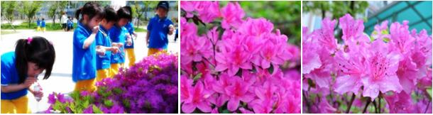bunga azela